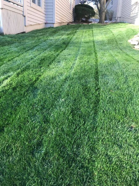 Affordable Lawn Mowing Service Near Me
