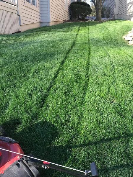 Best Lawn Service Nearby