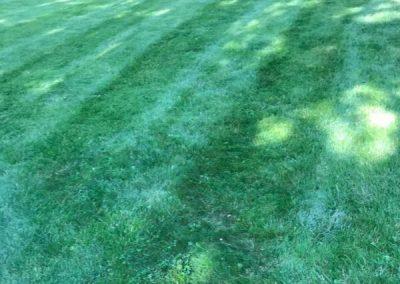 Lawn Service Kansas City MO