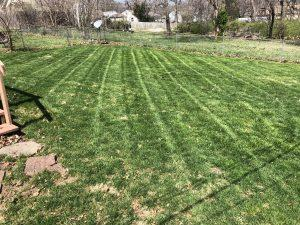 Best Lawn Mowing Service in Independence, Missouri